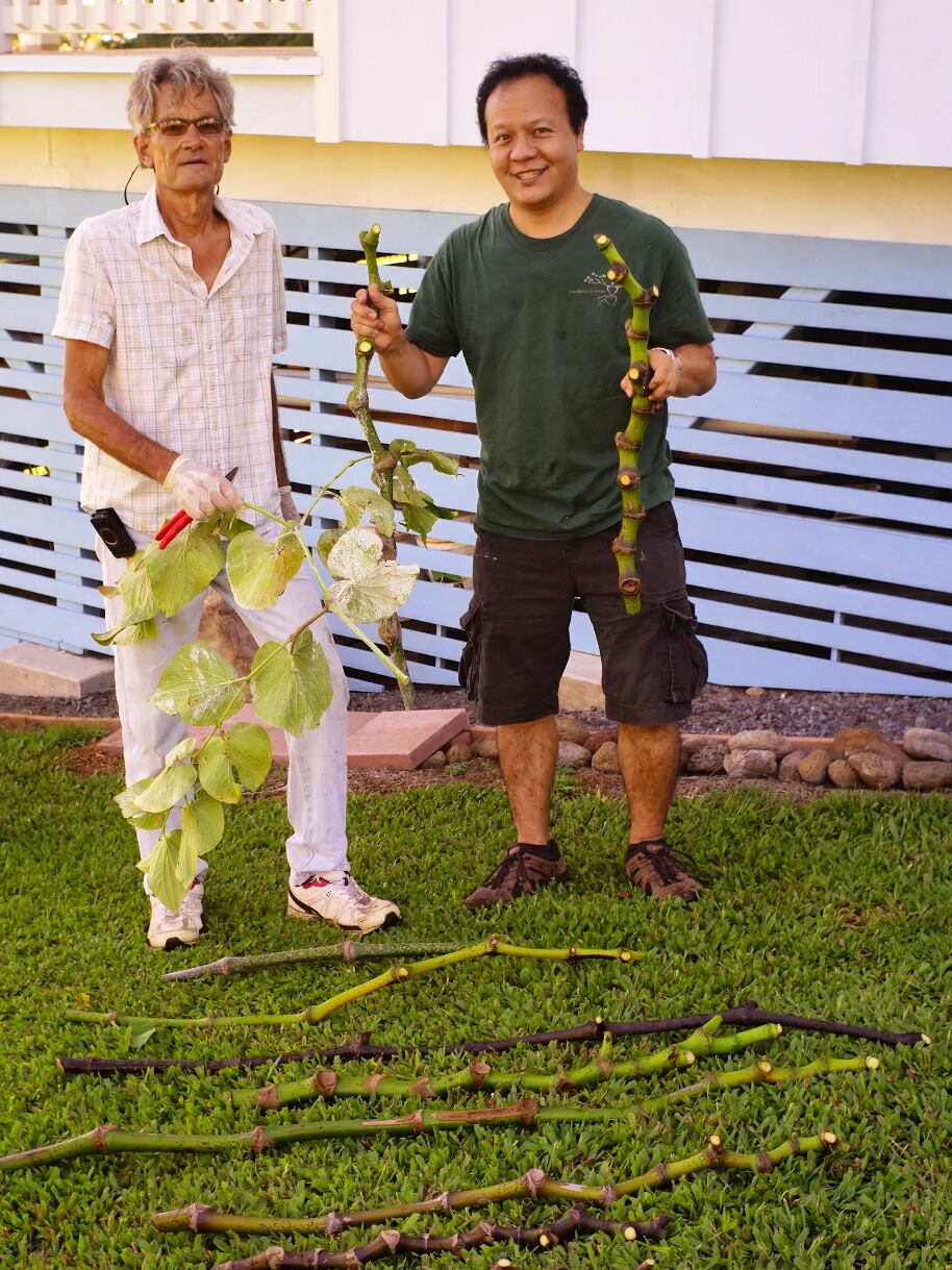Going over the Hawaiian 'awa cultivar collection with Ed Johnston and Jonathan Yee